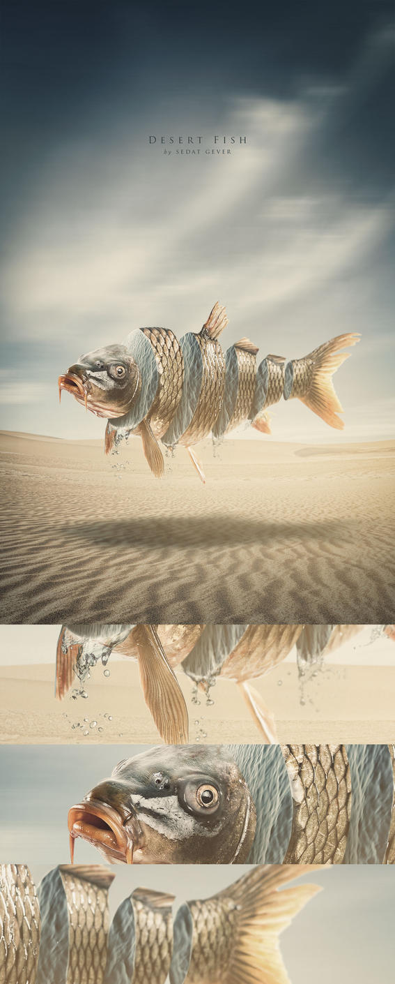 Desert Fish by sedatgever
