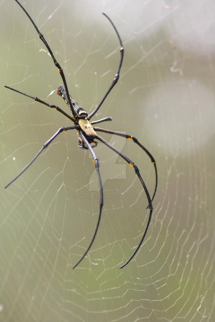 Itsy Bitsy Spider by dheeethalexandra