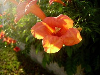 Flower by ImperataLexinor