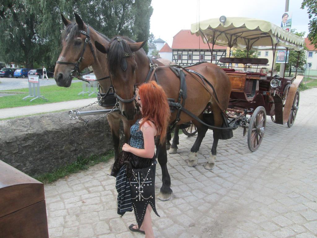 Bay horses by ImperataLexinor