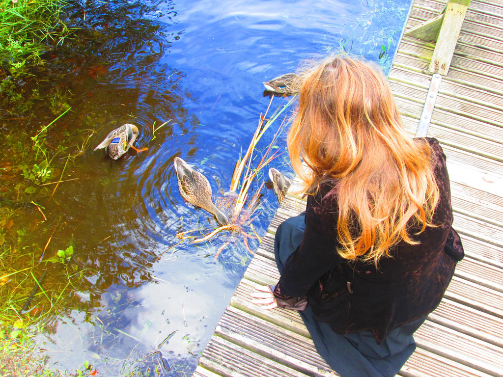 Ducks by ImperataLexinor
