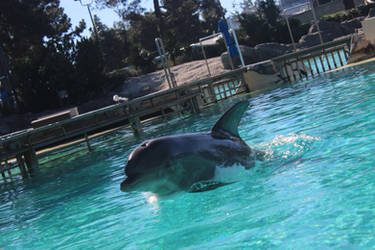 Dolphin by ImperataLexinor