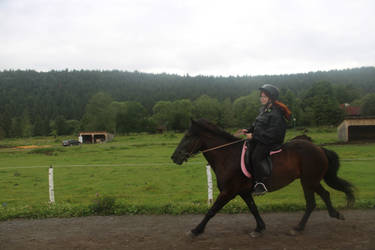 Icelandic horse by ImperataLexinor