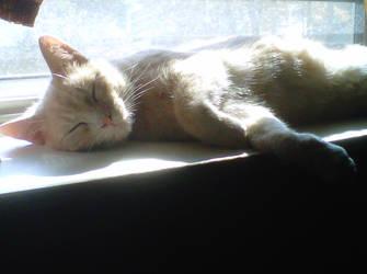 Peekaboo Asleep by faerielyght