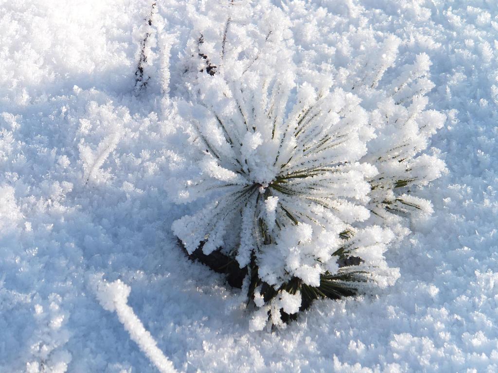 Frozen flower by Phoenixx62 on DeviantArt
