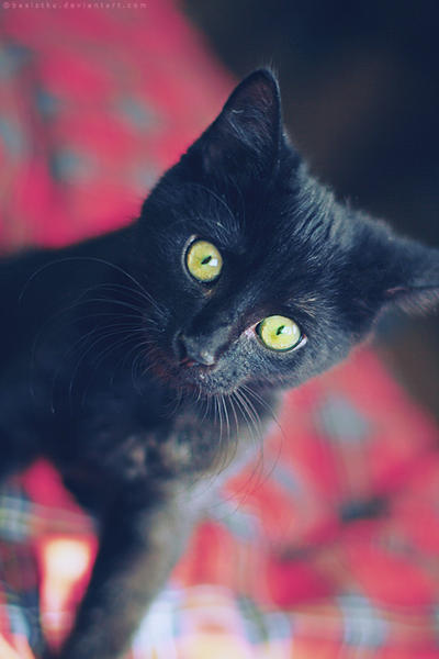 NUAGE DE QUETZAL    Clan du Vent.  Kitty_kitty_by_basistka-d3382ny