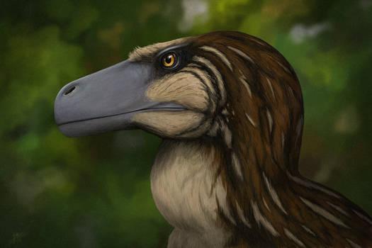 Dromaeosaurus portrait