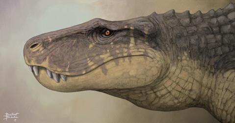 Baurusuchus portrait