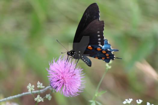 My My Butterfly