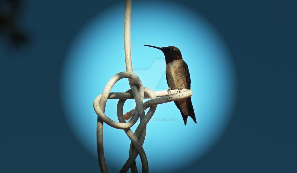 Hummingbird-2 by tiffanylayne