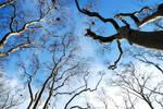 36- Blue Dreams... by salihagir