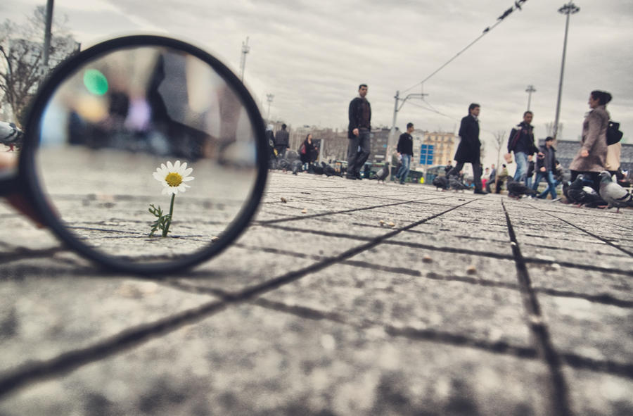 98- Magnifying Glass... VII by salihagir