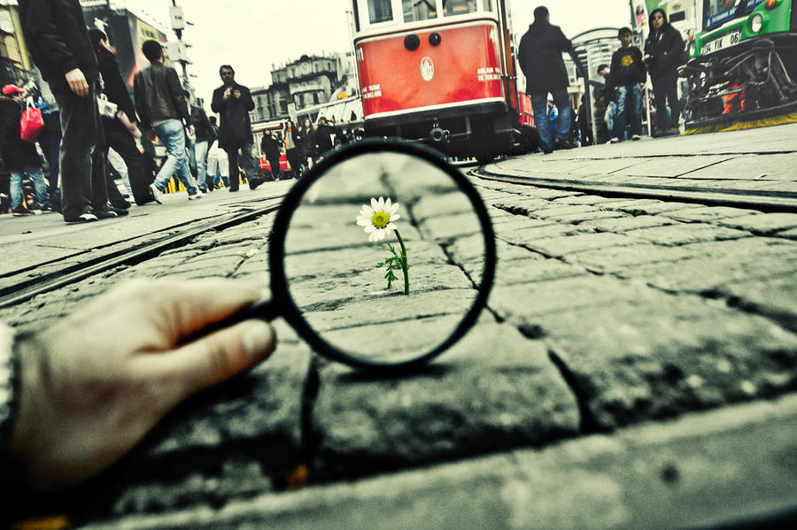 99- Magnifying Glass... VIII
