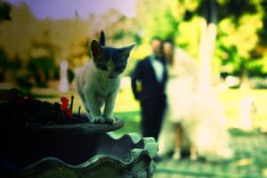 104- just married... by salihagir