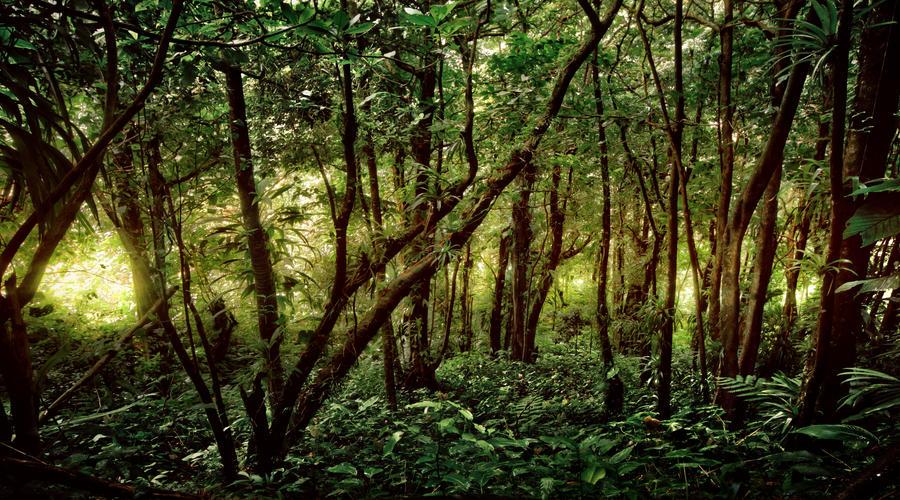 dominica / rainforest