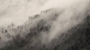 The Trees of Wilderland (Contest)