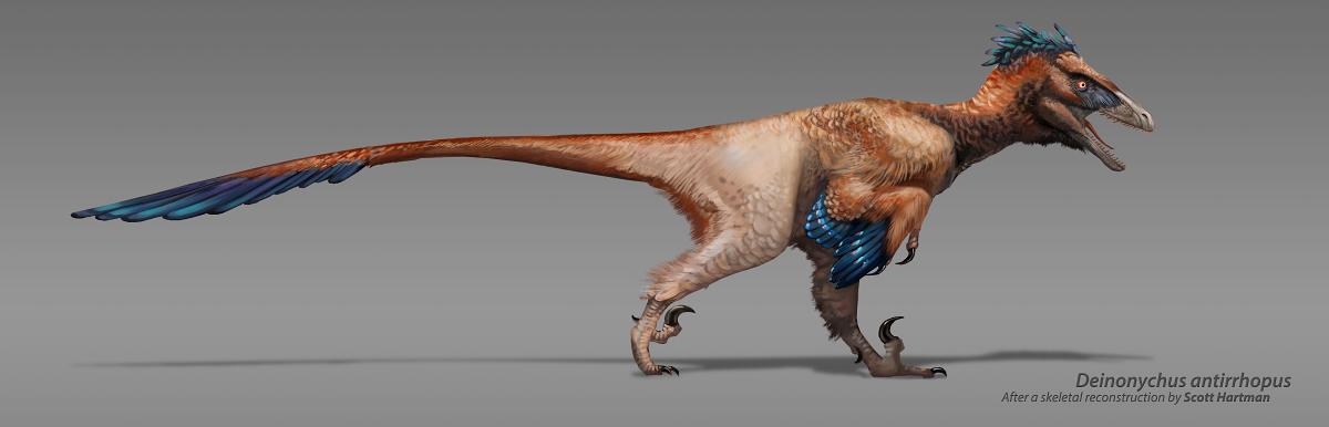 Deinonychus antirrhopus V.2 by Rhynn