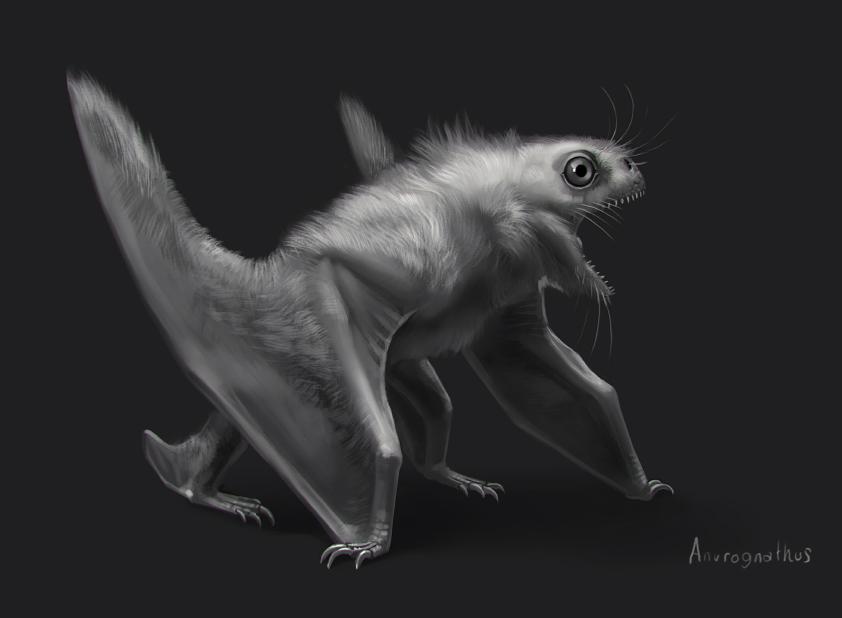 Anurognathus by Rhynn