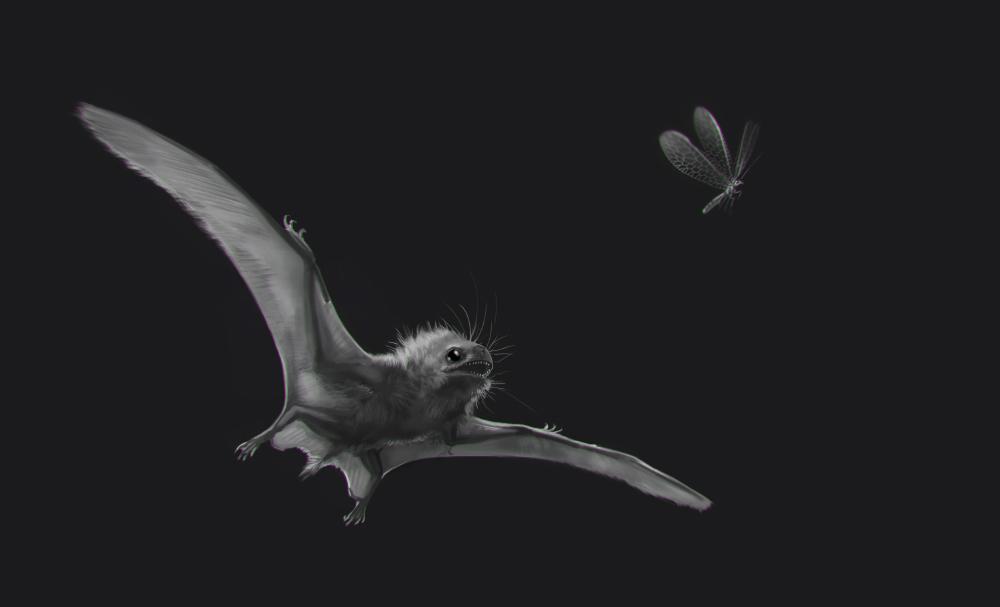 Anurognathus chasing a neuropteran by Rhynn