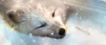 Dreaming - Wolfclawalchemist by tamor