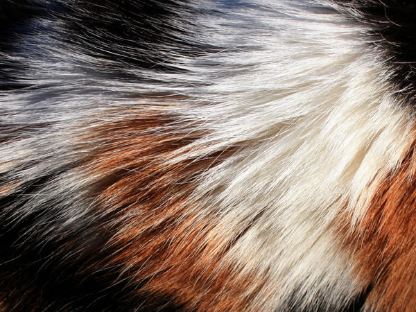 calico_fur_by_onesmallsquare.jpg