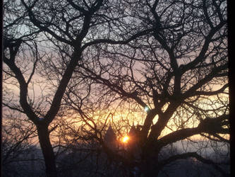 tree branches sunrise by TomKilbane