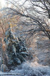 frozen wonderland by TomKilbane