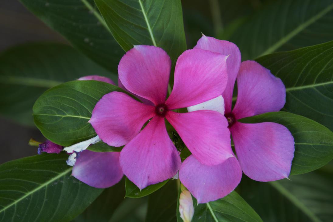 little flower i like by TomKilbane
