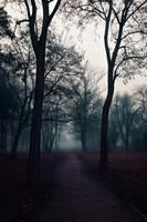 The paths we walk by vesaspring