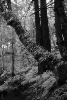 Fern Tree-coat
