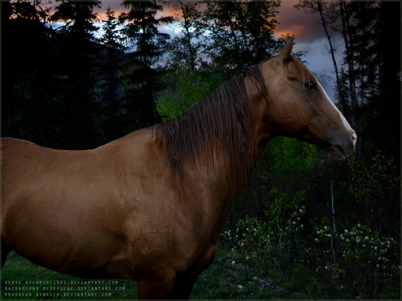 twilight by Subaru09