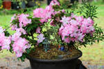flowering potted plant