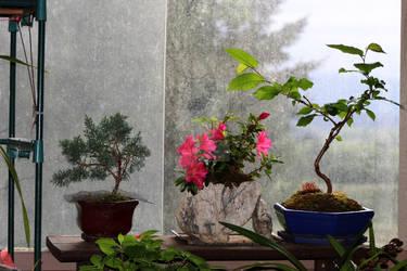 Potted plants on a shelf.