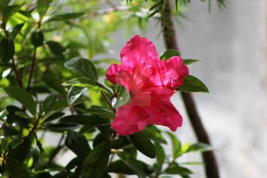 Lone flower.