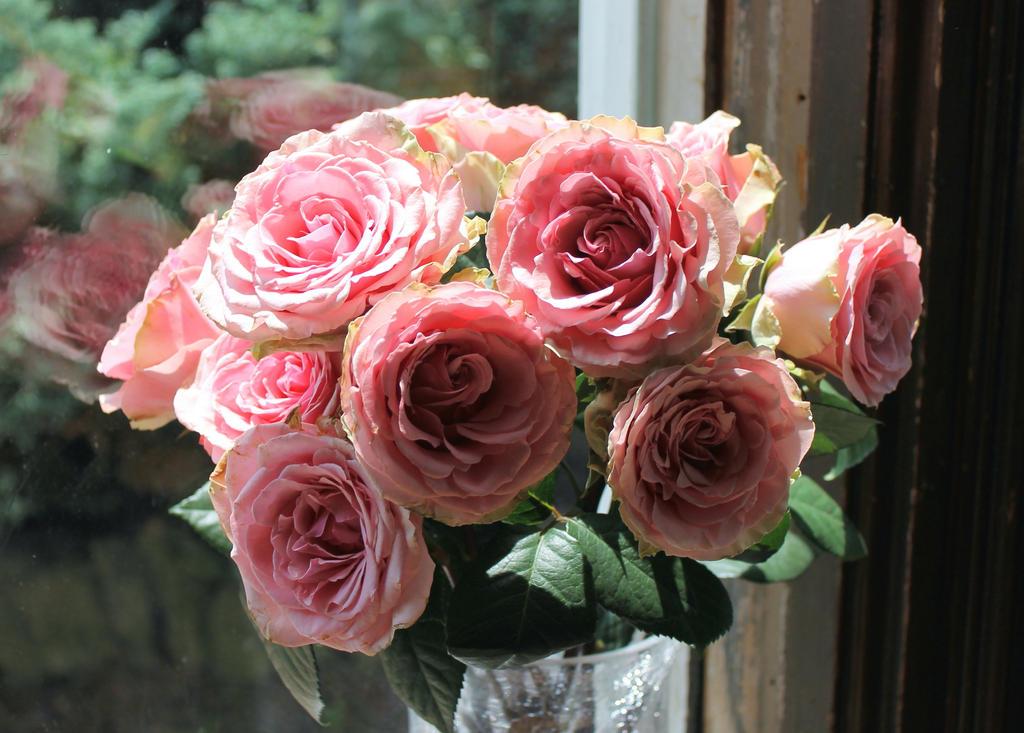 Pink Roses by Darkwalk12