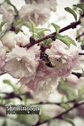 Blossom Follower.