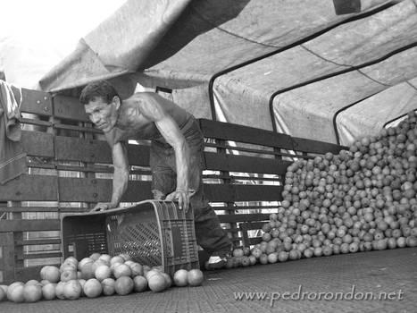 descargando las naranjas