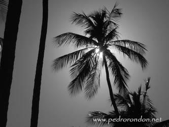 cocoteros en Playa Colorada 2 by pedrorondon