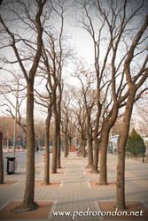 Calles de Beijing 8