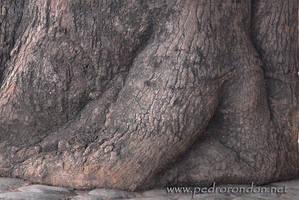 desnuda en el arbol 2 by pedrorondon