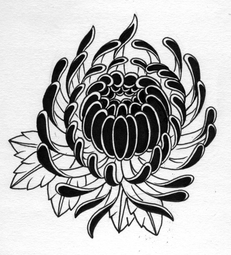 chrysanthemum by jontoogood on deviantart. Black Bedroom Furniture Sets. Home Design Ideas