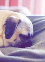 Sleepy Sunday by garnettrules21
