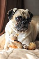 Pug and Friend by garnettrules21