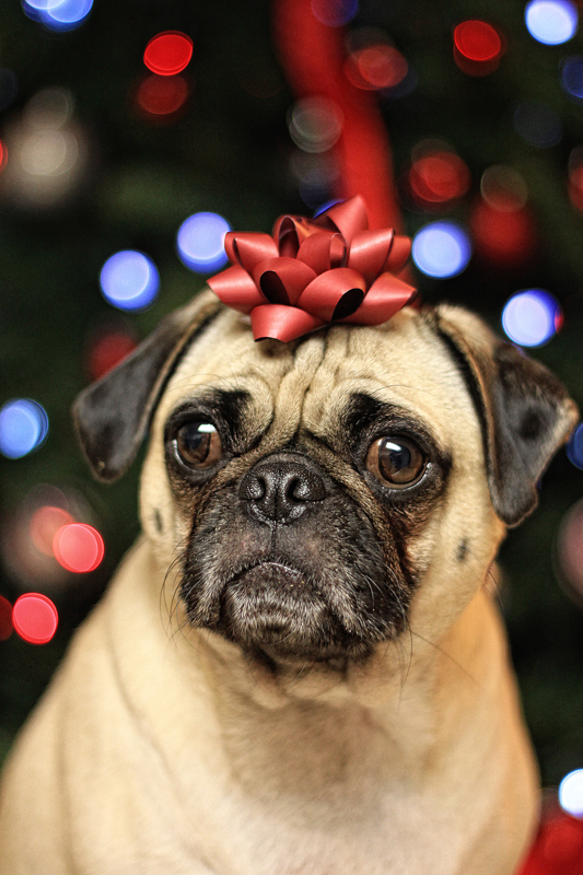 Christmas Pug by garnettrules21