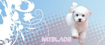 Bichon Frise by MTBlade