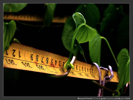Measured Growth