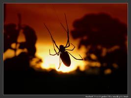 Arachnid by micahgoulart
