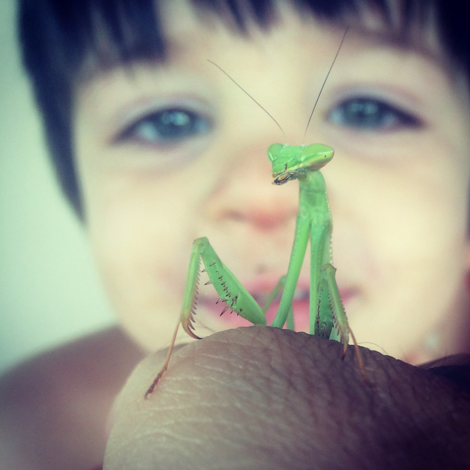 Noah Meets The Praying Mantis by micahgoulart