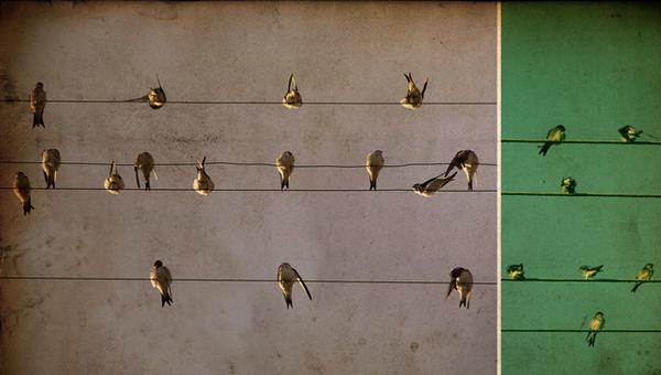 on line. by fantasmagorria
