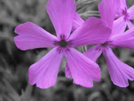 Purple Wildflower by AllyCat1994